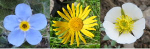 fiori-per